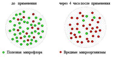 Хлорофиллработает избирательно рис 2